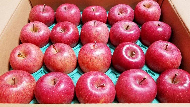山形県産サンふじりんご20玉5kg(11月下旬到着)